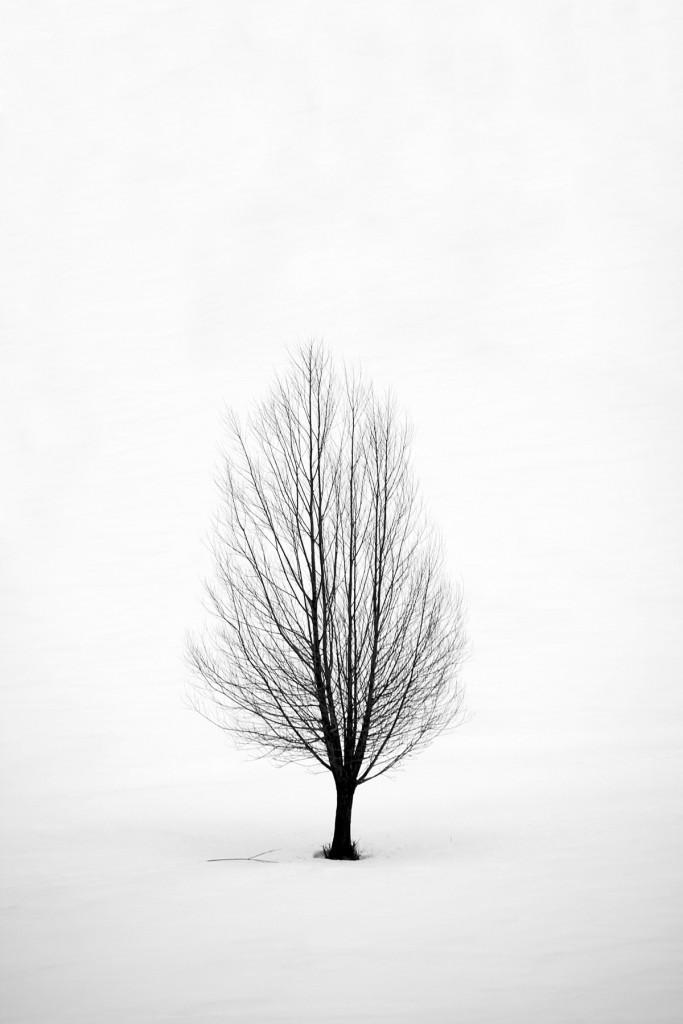 albero-y
