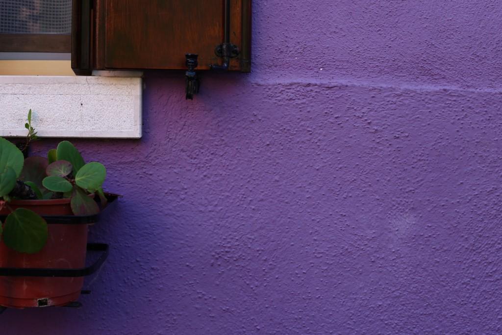 pianta-viola