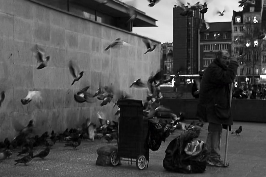 pigeon-man-parigi
